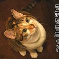 Photos: 2010062004