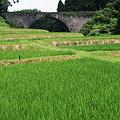 Photos: 田畑の潤い