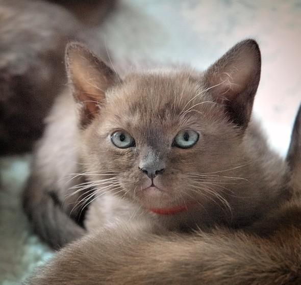 kitten1018_08