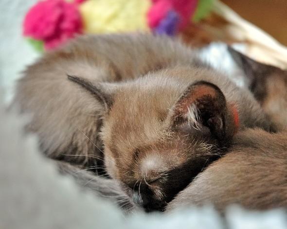 kitten1018_05