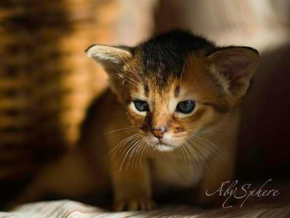 kitten1026_05