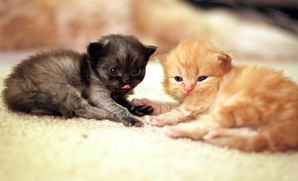 kitten1044_03
