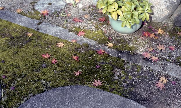 飛び石と落ち葉