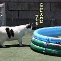 Photos: pool