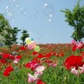 Photos: IMGP3906_0527