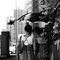 写真: 真夏の密談