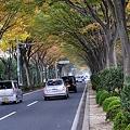 けや木通りの並木