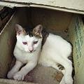 Photos: 捨て猫ではありません・・・