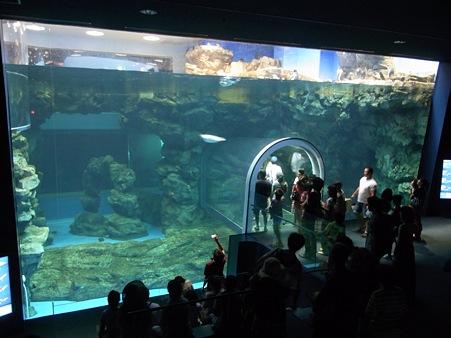 20110815 海響館 亜南極水槽04