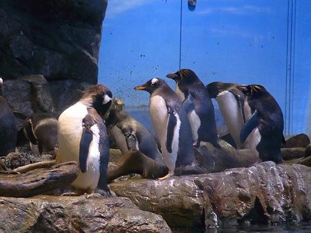 20110815 海響館 亜南極水槽09