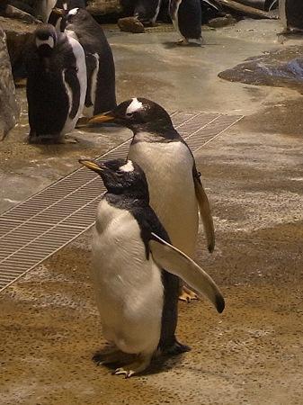 20110815 海響館 亜南極水槽07