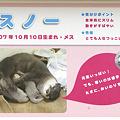 Photos: hirakata110917042