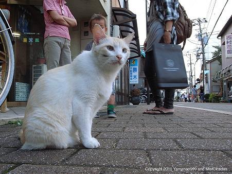 新竪町の猫
