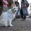 Photos: 新竪町の猫