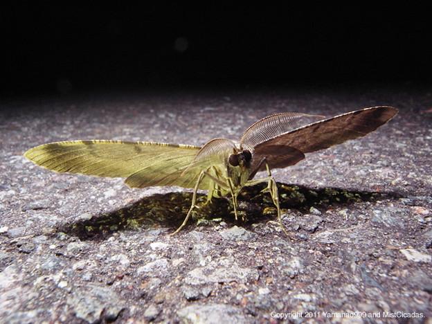 写真: yamanao999_insect2011_338