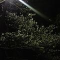 写真: これより某公園にてささやかなお花見。すごい、公園公園内に僕たちし...