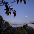Photos: 2010-11-20の空-2
