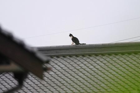 屋根の上のクロネコ