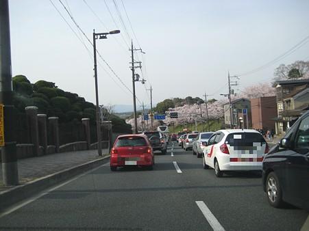 20110410_sakura4keage