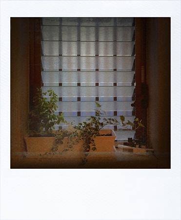 緑の窓 浴室