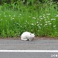 長い道路、猫もお散歩中