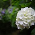 Photos: 白く