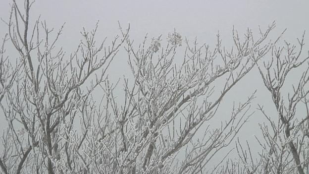 写真: 雪のえびの高原10
