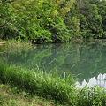 Photos: 吉沼池(奥側)