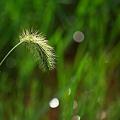 草の陰の妖精たち