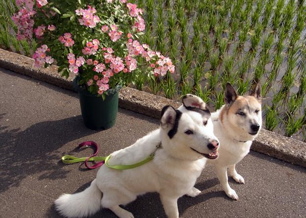 ベル&希675、2012-06
