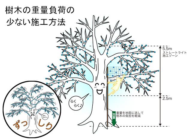 樹木施行ゾーン2