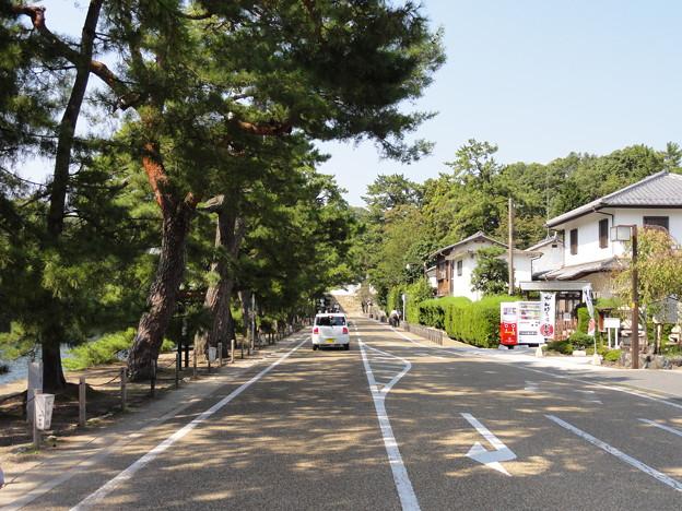 写真: 彦根城、いろは松