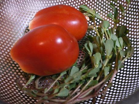 トマトとスベリヒユ
