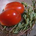 写真: トマトとスベリヒユ