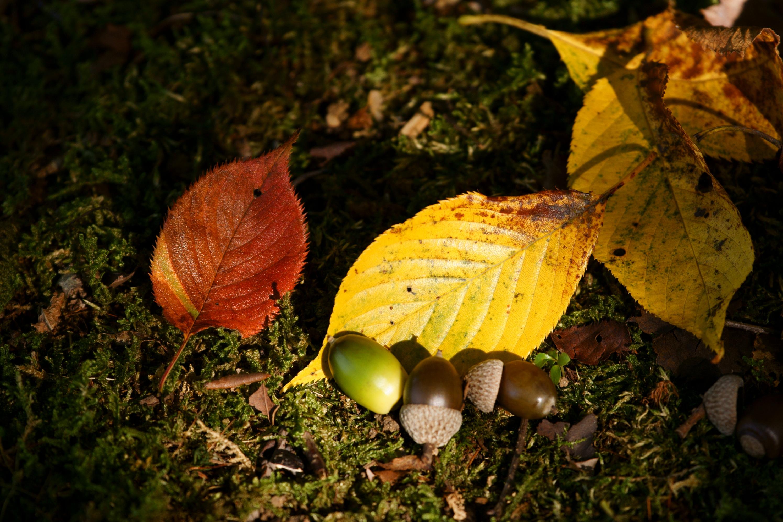 秋の寄り添い