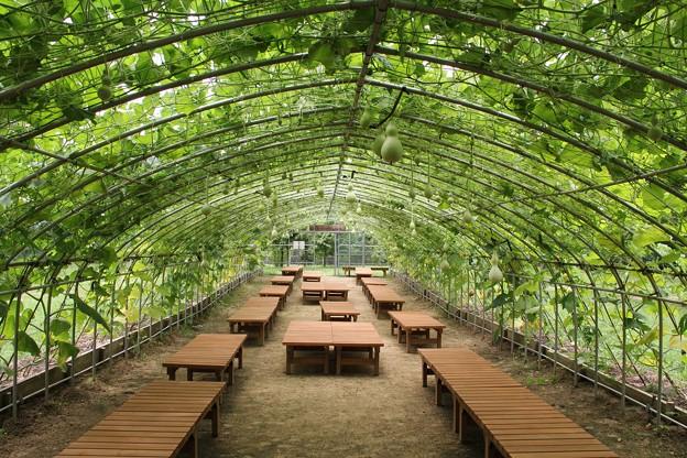 みどりのトンネル 2011