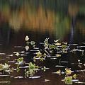 写真: 水草の輝き