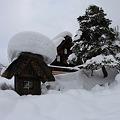 写真: 雪の重さに耐えて