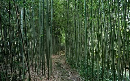 京都市洛西竹林公園40
