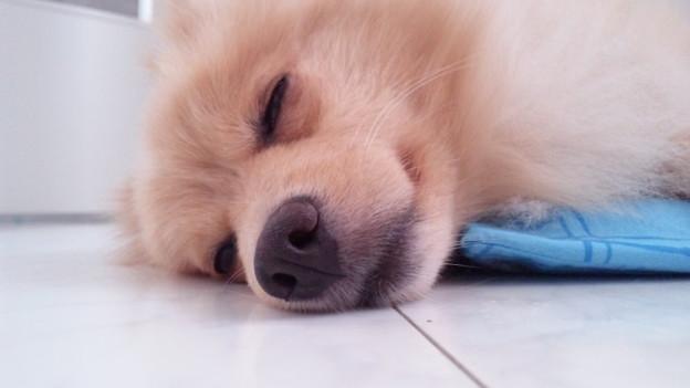 ポチ、寝ます…