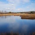 写真: Wetland