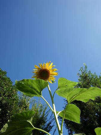 夏日和に咲く夏の花