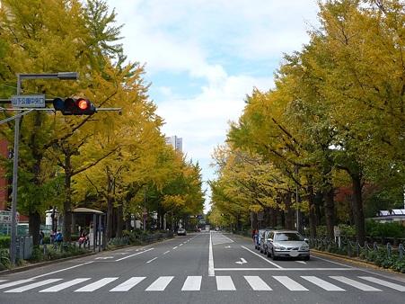 101119-紅葉 山下公園通り (34)
