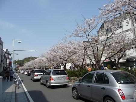 110411-鎌倉 段葛 (18)