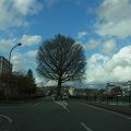 Photos: この木なんの木