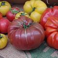 Photos: 売れすぎた巨大トマト