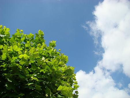 2010-7-19の空