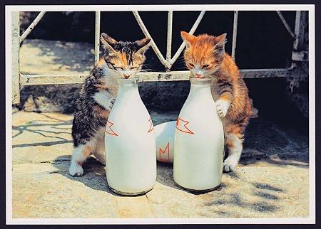レトロな牛乳びんと仔猫たち拡大