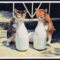 写真: レトロな牛乳びんと仔猫たち拡大