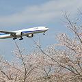 桜並木の向こうの飛行機